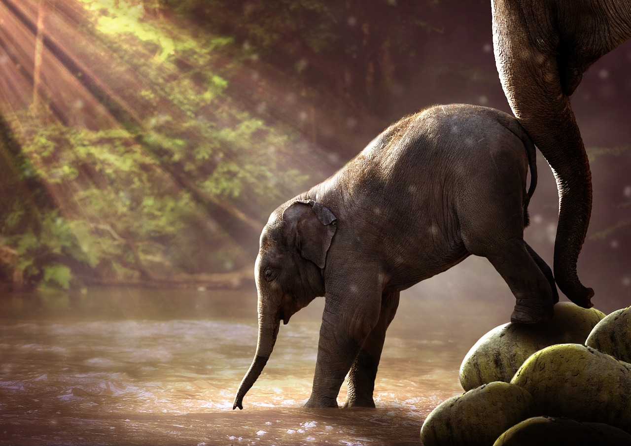 elefante bebe emocion
